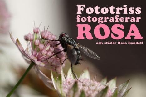 rosa_banner2